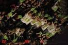 2010-vegas-ama-endurocross-kawasaki-report 4