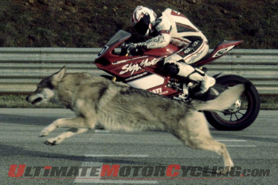 Ducati 1199 Panigale: Nunnari's Moto & Wolf Video