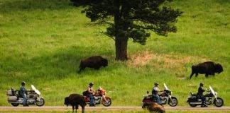 2019-AMA-Grand-Tours-Schedule-Buffalos